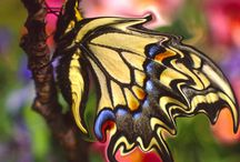 Just gorgeous / Things of beauty - jewels, birds. butterflies, and so on / by Allbark Nobite