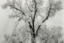Winter / by Forest Flower Designs