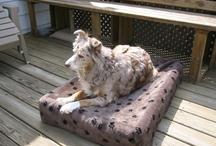 Australian Shepherd / Australian Shepherds enjoying Kuranda beds! / by Kuranda Dog Beds