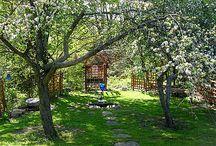 Secret Garden / by Enchanted Garden