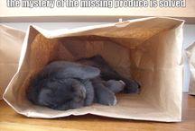 Pet Info / by Bridget Greeno