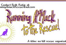 Rescue Groups United / An open board for all rescue groups who have Pinterest pages. A place to get your name out, let people know what area you're in, and direct them to your board. So that every organization gets a chance to put their word out, please don't pin more than once a day. Thanks! ~Beth founder of 'Running A'Muck to the Rescue' / by Running A'Muck Rescue
