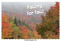 Fall / by Molly Jo