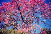 Fall Color / by Morton Arboretum