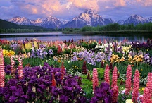 God's Creation *Bonnie's Heart and Home* / God's Beautiful Creation / by Bonnie's Heart and Home & Valor Virtual Solutions