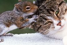 Animals / by Holly K. Weesner