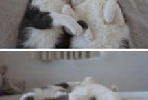 Kitties / by Mindy Fahrmeier