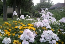 gardening / by Lourdes Cummings