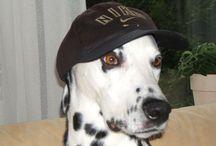 I LOVE  DALMATION / Ik hou van dieren, vooral de dalmatier. Zelf het ik er 2 gehad, Terry en Max. Een dier verrijkt mijn leven.  / by Trudie Lommerde-de Wit
