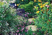 Butterfly garden / by Kristi Durfee