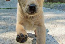 Pups / by Nikki Klint