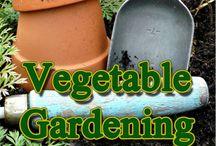 veggie garden / by Chelsea Smith