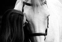Everything Equine / Horses, ponies, barns/farms, tack, and everything that goes along with... / by Lauren Ortiz