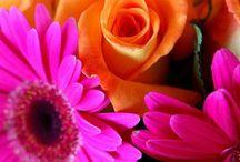 Flowers/Flores / by Delia Marin Hernandez