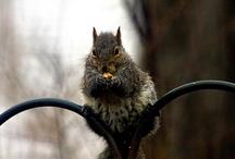 Squirrely World / Squirrels / by Connie Erikson