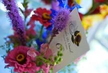 Wedding Vendor Spotlight / by WedAlert Network