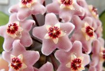flowers  / by Marcia Tobey Waldorf