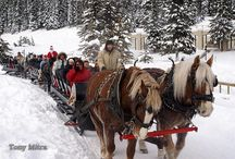 Idaho Winter Fairs & Festivals / No need to stay indoors when the temps drop. / by Visit Idaho