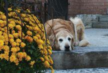 Dogs / by Suzi Dunn