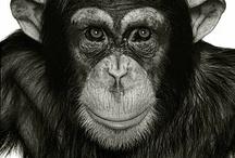 Monkeys, Apes, Chimps / by Mario Inghilleri