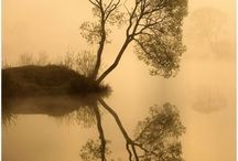 reflection / by Smadar Lorie