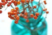 Turquoise & Orange !! / by Deb S.