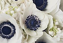 Wedding Flowers / by Jenny Flores
