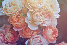 flowers / by Elsa Kettinger