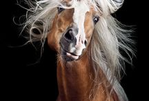 Portraits of Horses / by Michelle Billings