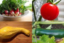 Kitchen Garden Vegetables / by Daniel Gasteiger