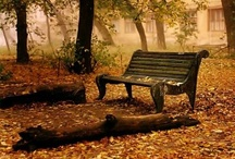 otoño / hojas y paisajes / by Karin Imola Gottig