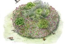 Gardening / by Wendy Hammond