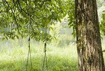 Back Yard/Gardening / by Jaime Matthews