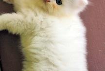 Cat Lady / by Marybeth Drope