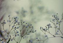 photography / by Pattie Komai