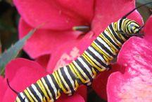 Butterfly Frenzy / by Rebecca Guyton