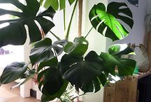 Indoor Plants / by Instyle Indulgence Interiors