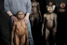 Hobbit, Homo floresiensis / by Kathy Murphy
