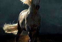 Horses / Horses / by Uduno Nysca