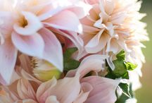 Light Pink Flowers / by Charming Events of Charleston