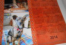 Pets & Animals / by Kodak Moments