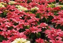 Christmas Holidays / by farm carolina