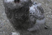 owls :)  / by Brittany Holman