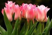 Flowers / by Darlene Pilet