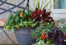 gardens / by Melody Reno-Ewen