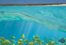 AUSTRALIA  / by Blake Schulman