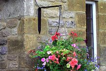 Hanging Baskets & Containers / by Mercedes Ferguson