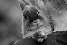 Photo shoot with new bunny  / by Mary Ann Moses