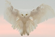 Owl B There / by Nikki Camp