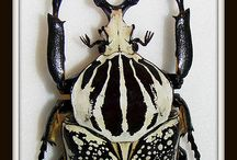 Insects / prints / by Pollevie ❤